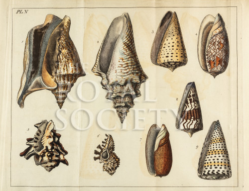 image mendes da costa, e_elements of conchology_1776_pl5 copy