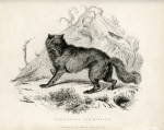 image richardson j_fauna boreali-americana_1829_plate 3