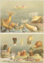 image a andres_le attinie_1884_plate 5