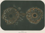 image armstrong w g_supplement---electric movement_plate 9
