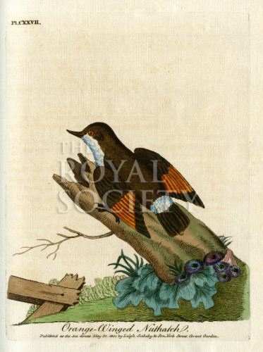 image latham j_supplement_1802_plate 127