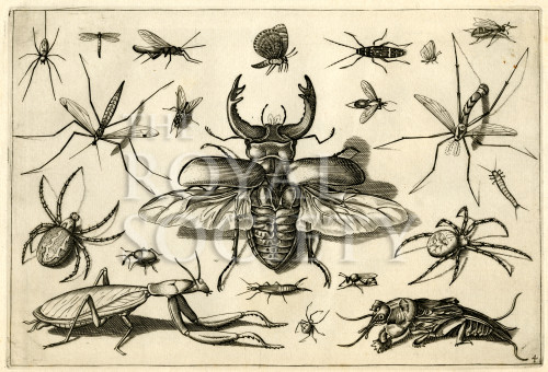 image hoefnagel d i_diversae insectarum_plate 4