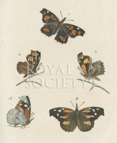 image fuessly_archiv der insect_plate 8