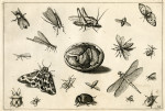 image hoefnagel d i_diversae insectarum_plate 14