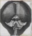 image hooke_micrographia_1665_schem xxiv
