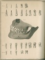 image fox, j_the natural history of the human teeth_1803_plate7