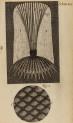 image hooke_r_micrographia_246