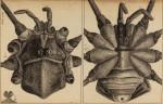 image hooke_r_micrographia_302