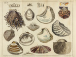image mendes da costa, e_elements of conchology_1776_pl6 copy