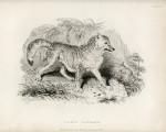 image richardson j_fauna boreali-americana_1829_plate 4