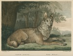 image shaw, g_museum leverianum_1792_plate 12