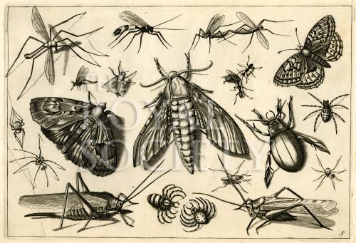 image hoefnagel d i_diversae insectarum_plate 5