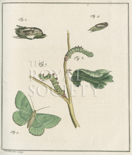 image fuessly_archiv der insect_plate 9