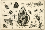 image hoefnagel d i_diversae insectarum_plate 15