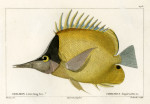 image cuvier g_histoire_poissons_plate 175