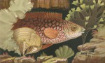 image gosse, p h_the aquarium_1854_plate 1