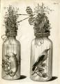 image ruysch f_thesaurus animalium_1710_plate 1