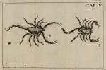 image swammerdam_j_1669_historia_insectorum_plate_5