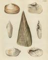 image mendes da costa, e_historia naturalis_1778_pl16