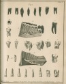 image fox, j_the natural history of the human teeth_1803_plate8