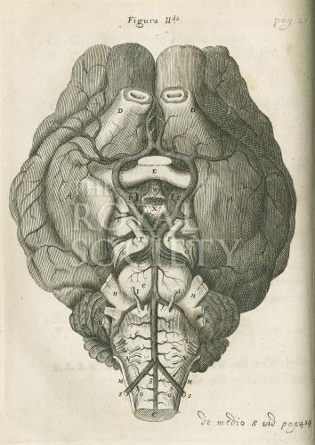 image willis, t_cerebri anatome_1664_fig2