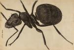 image hooke_r_micrographia_310