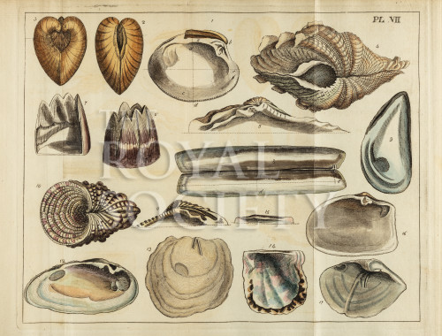 image mendes da costa, e_elements of conchology_1776_pl7 copy