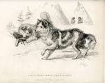 image richardson j_fauna boreali-americana_1829_plate 5