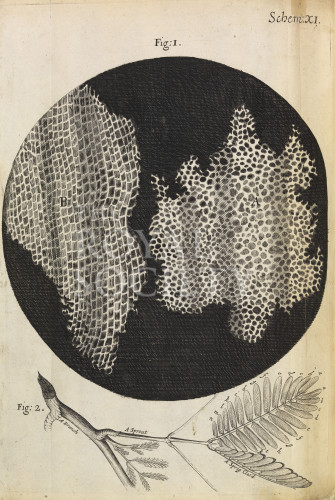 image Hooke, R_Micrographia_1665_cork_schemXI_fig1&2