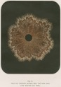 image armstrong w g_supplement---electric movement_plate 12