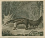image shaw, g_museum leverianum_1792_plate 24