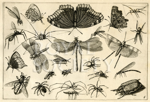 image hoefnagel d i_diversae insectarum_plate 6