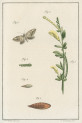 image fuessly_archiv der insect_plate 11
