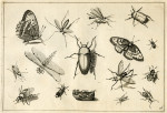 image hoefnagel d i_diversae insectarum_plate 16