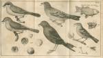 image Linnaeus, C_Fauna Svecica_1746_tab 2