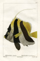 image cuvier g_histoire_poissons_plate 176