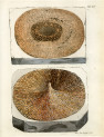 image mantell g_fossils_1822_plate 14
