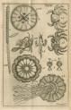image Linnaeus, C_Wastgota-resa_1747_tab 3