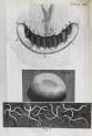image hooke_micrographia_1665_schem xxv