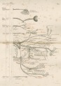 image flower, w- h_diagrams of the nerves of the human body_1872_plate1