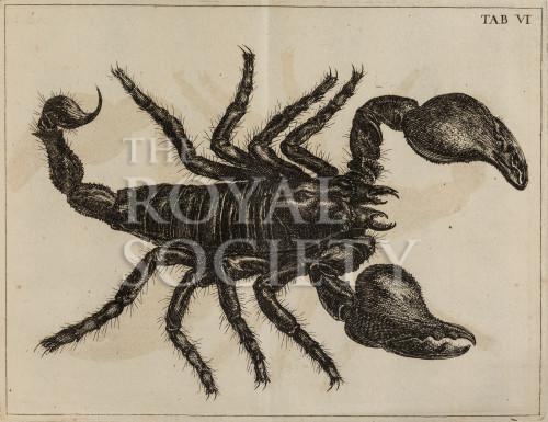 image swammerdam_j_1669_historia_insectorum_plate_6