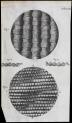 image hooke_micrographia_1665_schemiii