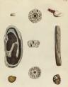 image mendes da costa, e_historia naturalis_1778_pl17