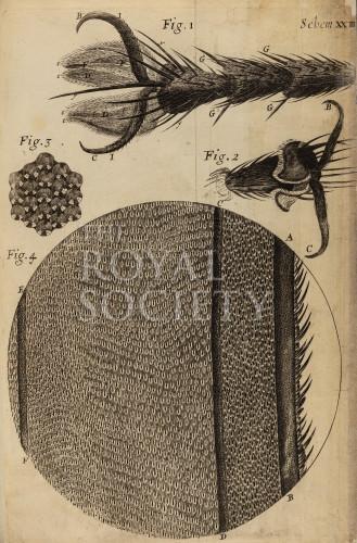 image hooke_r_micrographia_258