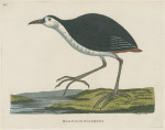 image pennant t_indian zoology_plate 12