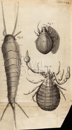 image hooke_r_micrographia_315