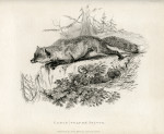 image richardson j_fauna boreali-americana_1829_plate 6