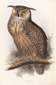 image gould, j_birds of europe_1832-7_vol4_eagle owl