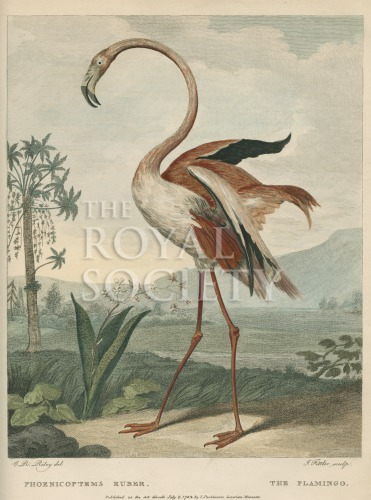 image shaw, g_museum leverianum_1792_plate 31
