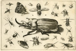 image hoefnagel d i_diversae insectarum_plate 7
